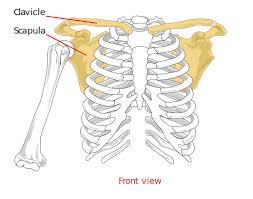 shoulder1